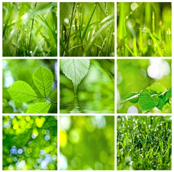 bigstock-collection-of-green-grass-and--37045318
